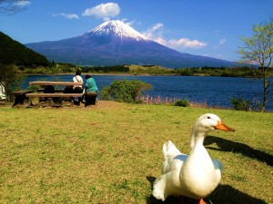 1280px-Mt_fuji_with_a_duck