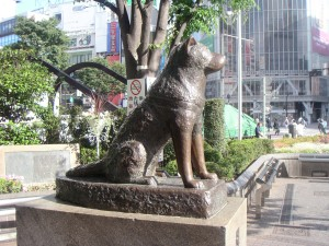 hachiko200505-41